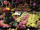 """Târgul cu Bunătăți"""", în acest weekend la Sinaia, cu specialități italiene"""